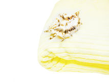 Sea shell on bathing towel. Isolated royalty free stock photos