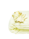 Sea shell on bathing towel. Isolated stock image
