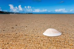 Sea shell on a beach Stock Photography