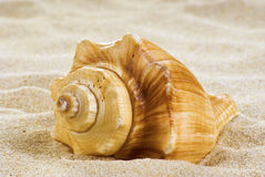 Sea shell on the beach. Close-up sea shell on the beach Royalty Free Stock Image