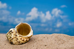Sea shell on beach Royalty Free Stock Image