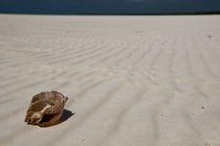 Sea shell on the beach Stock Photos
