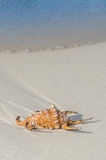 Sea Shell on Beach Stock Photography