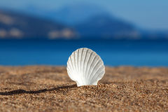 Sea shell on Royalty Free Stock Photography