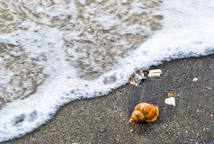 Sea shell on the beach Stock Photos