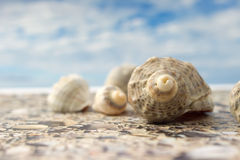 Sea Shell on the beach against the sky Stock Images