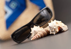 Sea Shell with Beach Assets Stock Photo