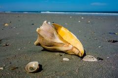 Sea shell on a beach of atlantic ocean at sunset Royalty Free Stock Photos