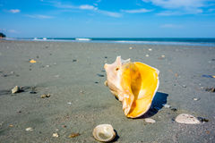 Sea shell on a beach of atlantic ocean at sunset Stock Images