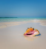 Sea shell in the beach Stock Image