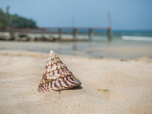 Sea shell on the beach Royalty Free Stock Image