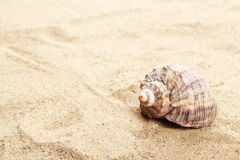 Sea shell on the beach Royalty Free Stock Images