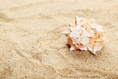 Sea shell on the beach, close up Royalty Free Stock Image