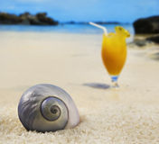 Sea shell on a beach with fruit cocktail Stock Image