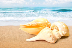 Sea shell at beach. Group of sea shell on the beach royalty free stock photos