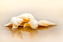 Sea shell at beach. Group of sea shell on sand at the beautiful beach stock photography