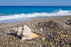 Sea shell on the beach. Landscapes of sea shell on the beach Stock Images