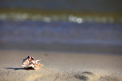 Sea shell on beach at ocean background Stock Photography