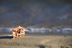 Sea shell on beach at ocean background Royalty Free Stock Photography