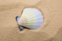 Sea shell. On beach sand as a background Stock Photography