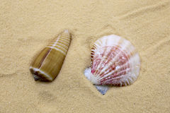 Sea shell. On beach sand as a background Stock Images