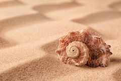 Sea shell on beach in the sand stock image