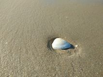 Sea shell on beach and sand Stock Photography