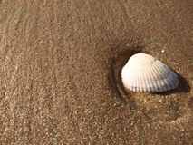 Sea shell on beach and sand Royalty Free Stock Photos