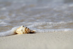 Sea shell. On the beach sand, shallow focus Royalty Free Stock Photography