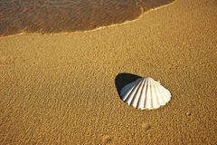 Sea shell by the beach Royalty Free Stock Photos