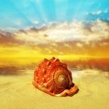Sea shell on beach Stock Photography