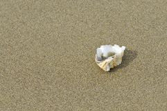 Sea shell on the beach. Royalty Free Stock Photography
