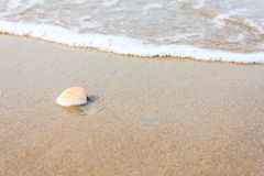 A sea shell on beach. With waves Royalty Free Stock Photo