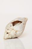 Sea shell, beautiful ocean life of Andaman, Thailand.  Stock Photography
