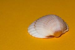 Sea shell. Beautiful seashell on yellow background Royalty Free Stock Images
