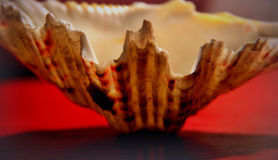 Sea shell. Big sea shell on a table in a living room Stock Photo