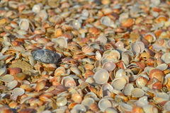 Sea shell and black stone Royalty Free Stock Photos