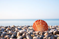 Sea shell and blue sky on background Royalty Free Stock Photography