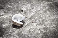 Sea shell with sea and blue sky on background stock photography
