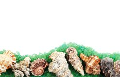Sea shell border Royalty Free Stock Image