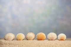 Sea Shell Border Below OOF Sky With Copy Space royalty free stock photography