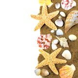 Sea shell border Stock Images