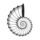 Sea shell clam. Silhouette on white Stock Photography