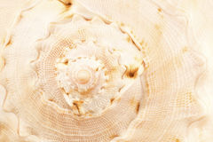 Sea shell close up Stock Images
