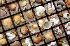 Sea shell collage Stock Photos