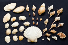 Sea shell collection Stock Images