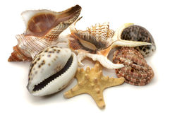 Sea-shell collection Royalty Free Stock Image