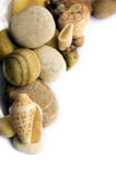 Sea shell collection Stock Photography