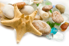 Sea shell collection Royalty Free Stock Photography