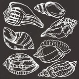 Sea shell collection. Vector set of hand drawn icons  on a black background Royalty Free Stock Photos